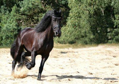 Fotoshoot paard in actie